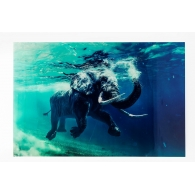 Picture Glass Swimming Elephant 180x120cm